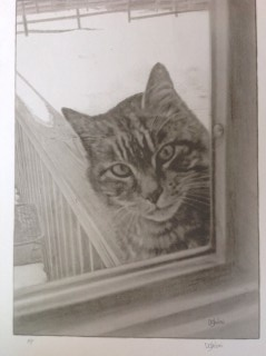 Dave Ghiloni: The Cat IN The Window